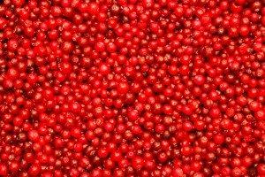 cranberries2